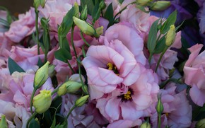Picture flowers, bouquet, pink, eustoma