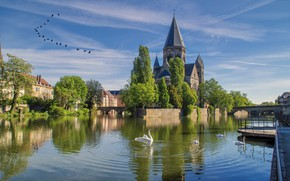 Picture landscape, lake, swans
