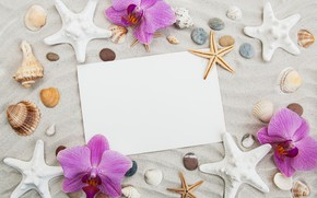 Picture flowers, shell, orchids, wood, composition, Olena Rudo