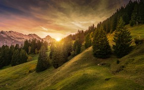 Picture forest, the sky, the sun, trees, mountains, Switzerland, slope, Alps, houses, Lauterbrunnen, Mürren