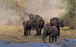 Picture nature, elephant, Africa, elephants, the herd, a herd of elephants