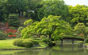 Picture trees, garden, Tokyo