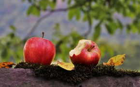 Picture Apple, pair, Two