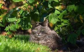 Picture cat, cat, leaves