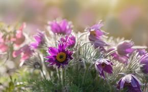 Picture spring, Sleep-grass, Cross