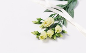 Picture flowers, bouquet, tape, gentle, white, buds, beautiful, eustoma