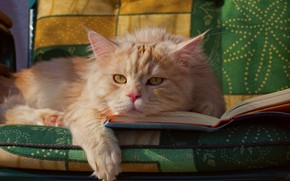 Picture cat, look, red, muzzle, book, foot, cat