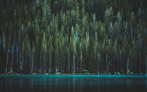 Picture forest, trees, lake, USA, Yosemite national Park