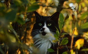 Picture cat, cat, look, face, leaves, light, branches, nature, background, thickets, black and white, foliage, portrait, ...