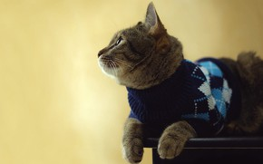 Picture cat, look, pose, background, pattern, lies, jacket, sweater