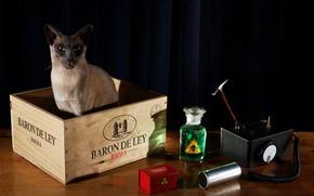 Picture cat, table, radiation, black background, still life, box, physics, device, experiment, dosimeter, measuring, Schrodinger's cat