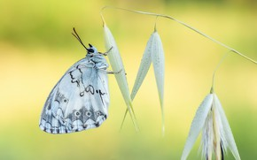 Picture flower, nature, butterfly