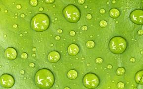 Wallpaper water, drops, sheet, Macro