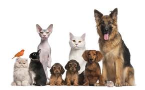 Picture animals, cat, dog