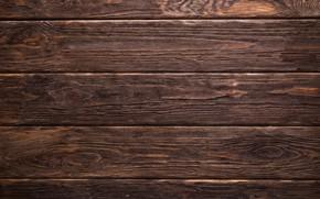 Picture background, tree, minimalism, wood, background