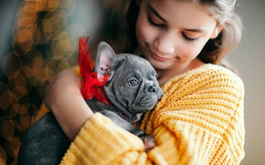 Picture glare, mood, dog, friendship, girl, puppy, face, bow, doggie, French bulldog
