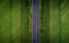 Picture road, field, nature