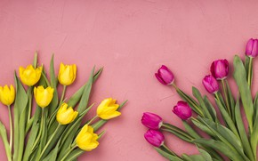 Picture flowers, tulips, pink, yellow, pink, flowers, tulips