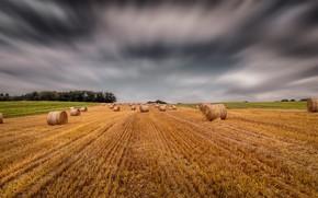 Picture field, horizon, bales, straw