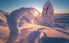 Picture winter, the sun, rays, snow, trees, nature, morning, ate, The Kola Peninsula, Murmansk oblast, Rev …
