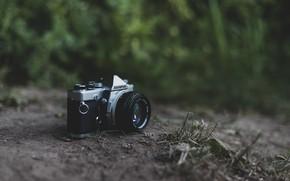 Picture grass, retro, camera, olympus, fotoapparat, Olympus