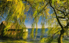 Picture greens, light, nature, house, tree, branch, shore, spring, pond