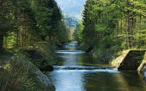Picture forest, summer, water, mountains, river, thresholds