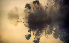 Picture trees, fog, reflection, river, river, trees, fog, reflection, Anton van Dongen