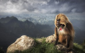 Picture mountains, fog, open, rocks, height, monkey, baboon