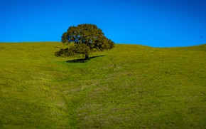 Picture the sky, grass, tree, hills