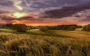 Wallpaper field, autumn, forest, summer, the sky, the sun, clouds, trees, landscape, sunset, clouds, nature, field, ...