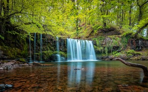 Picture greens, forest, branches, stones, shore, foliage, waterfall, stream, the bottom, snag, pond