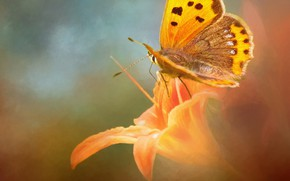 Picture macro, background, butterfly, Lily, treatment, orange, art, photoart