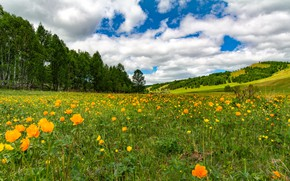 Picture greens, field, forest, summer, the sky, grass, clouds, flowers, mountains, blue, hills, glade, dal, meadow, …