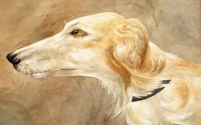 Picture Louis Icart, Portrait of Greyhound, watercolor and pencil