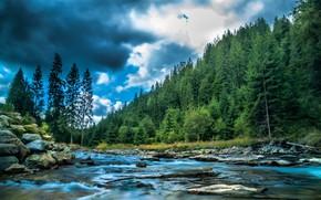 Picture forest, landscape, clouds, nature, river, stones, Bank