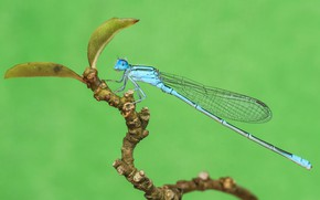 Picture macro, background, dragonfly, insect