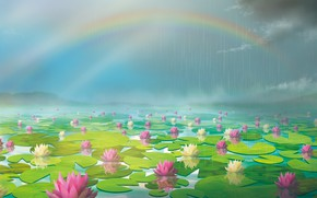 Picture pond, rain, rainbow, water lilies