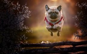 Picture each, dog, running, flight