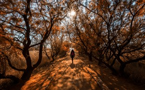 Picture road, autumn, forest, the sun, rays, light, branches, Park, mood, trunks, foliage, back, track, girl, …