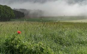 Picture field, summer, Mac
