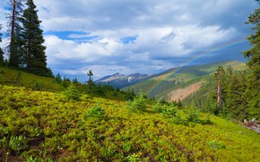 Picture greens, forest, clouds, mountains, vegetation, rainbow, dal, slope, meadow, pine, pine