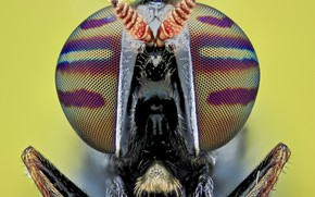 Picture eyes, macro, fly, background, portrait, insect