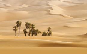 Picture Nature, Wallpaper, Sands, Dune, Desert