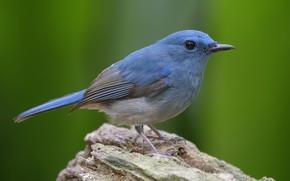 Picture bird, stump, bird
