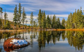 Picture trees, landscape, nature, lake, beauty, panorama