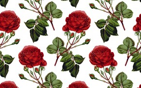 Picture white, background, roses, texture, buds, Roses, Background