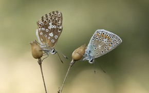 Picture butterfly, background, pair