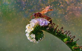 Picture flower, OSA, flower, wasp, Fahmi Bhs
