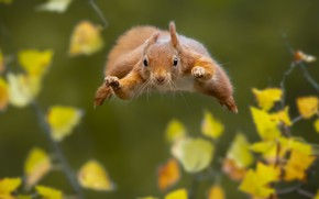 Picture nature, jump, protein